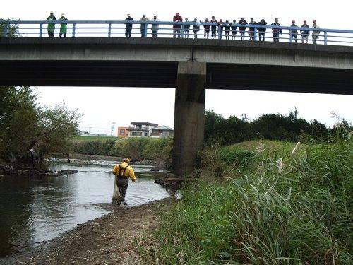橋の上の20人程の大人と子どもが、投網を手に川中を歩くスタッフに注目