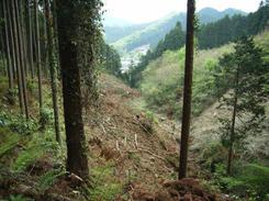 伐採された後を片付け作業中の谷